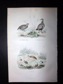 Buffon 1849 Hand Col Bird Print. Partridge & Quail